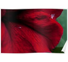 Abstract flower Case Poster