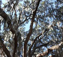 Light Shimmering Through Spanish Moss by LightFootsteps