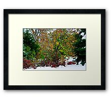 A Cacophony of Color Framed Print
