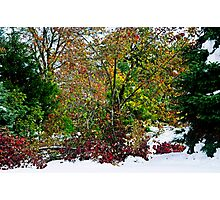 A Cacophony of Color Photographic Print