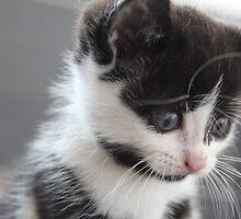 Kitten portraits 4 by Etoraa
