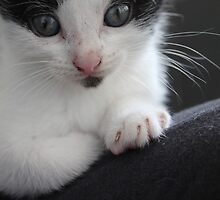 Kitten portraits 5 by Etoraa