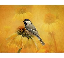 Little Chickadee Photographic Print