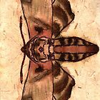 Moth by chelleill
