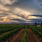 Vavasour Wines, Marlborough NZ by andreisky