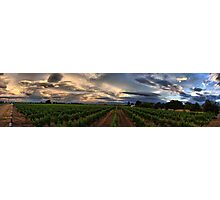 Vavasour Wines, Marlborough NZ Photographic Print