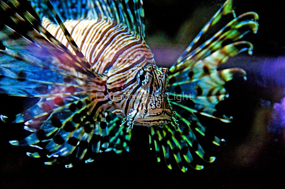Psychedelic Fish by Renee Hubbard Fine Art Photography