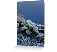 Frost Me  Greeting Card
