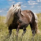 On the Wild Side - Ponies of the Grayson Highlands by Karen Peron