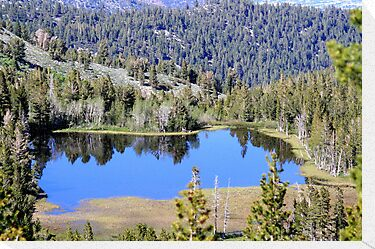 Pond on Mt Rose,Reno,Nevada USA by Anthony & Nancy  Leake