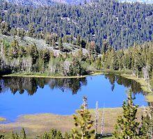 Pond on Mt Rose,Reno,Nevada USA by Anthony & Nancy  Leake