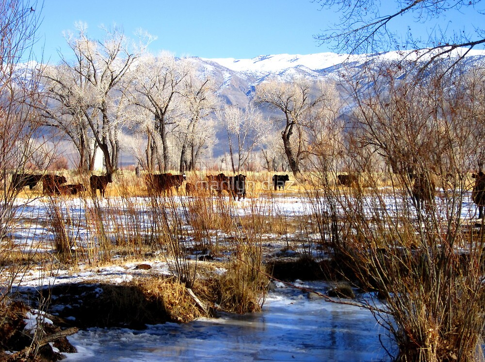 Winter in the Pasture by marilyn diaz