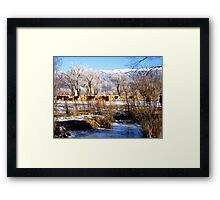 Winter in the Pasture Framed Print