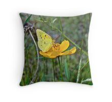 Orange Sulphur Butterfly - Colias eurytheme Throw Pillow