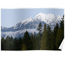 Olympic National Forest January 1st 2013 Poster
