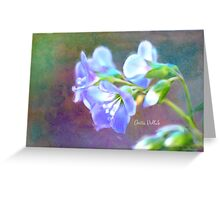 Painted Greek Valerian Blossoms Greeting Card