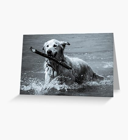 Lockey the Golden Retriever Greeting Card