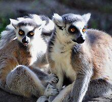 Ring-tailed Lemur Family by Savannah Gibbs
