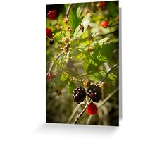 Berries in the Evening Greeting Card