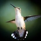 Hummingbird Mid-Flight by MsMelStevens