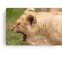 Toughy The Little Lion Cub Canvas Print