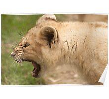 Toughy The Little Lion Cub Poster