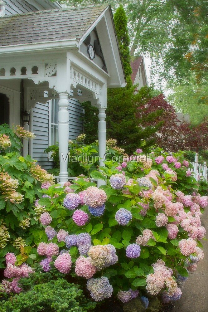 Hydrangea Porch by Marilyn Cornwell