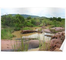 The mighty Bushveld of South Africa Poster