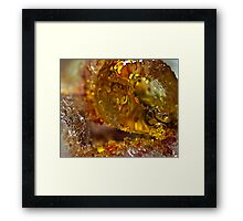 Bejeweled Ice Framed Print