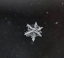 Snowflakes by Haz Preena