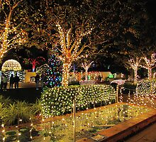 Holiday Lights in the Garden at Florida Botanical Gardens by Irina777