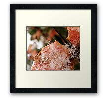 Snow Flakes Framed Print