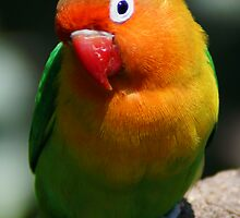 Rainbow g by pcfyi