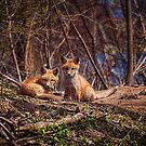 Cute Kit Foxes Together 2 by Thomas Young