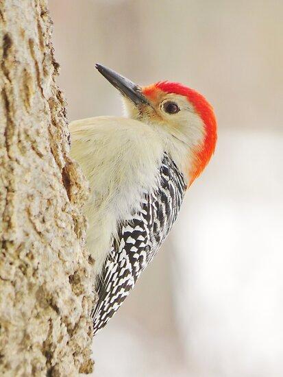 Woodpecker on a Gray Winter's Day by lorilee