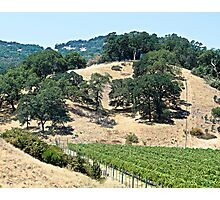 A California Vineyard During the Drought Photographic Print