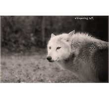 leader of the pack Photographic Print