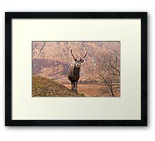 Glen Etive Stag Framed Print
