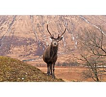 Glen Etive Stag Photographic Print