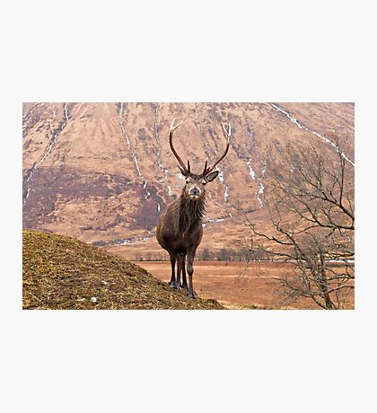 Glen Etive Stag Photographic Print