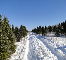 Tree Farm Trail by CandyBond
