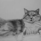 Piva, the Cat by Deborah Pass