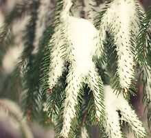 Snow on the Pine by AbigailJoy
