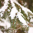 Pine Branch by AbigailJoy