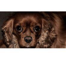 Those Puppy Dog Eyes Photographic Print