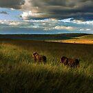 Brothers - Masai Mara Kenya by Pascal Lee (LIPF)
