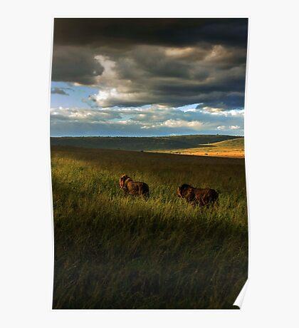 Brothers - Masai Mara Kenya Poster