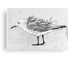 Seagull #2 Canvas Print