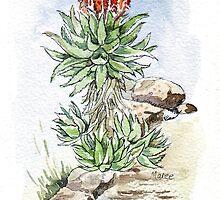 Aloe ferox in my garden by Maree Clarkson