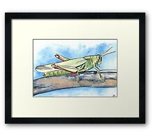 Grasshopper Watercolours and Ink Framed Print